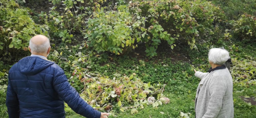 Preoccupante e pericoloso furto di ortensie nel Parco Kennedy