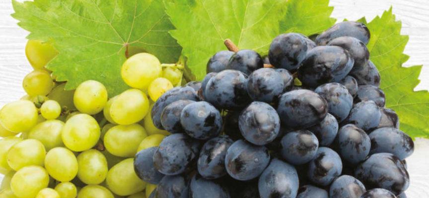 Quotazioni in aumento per l'uva da tavola.