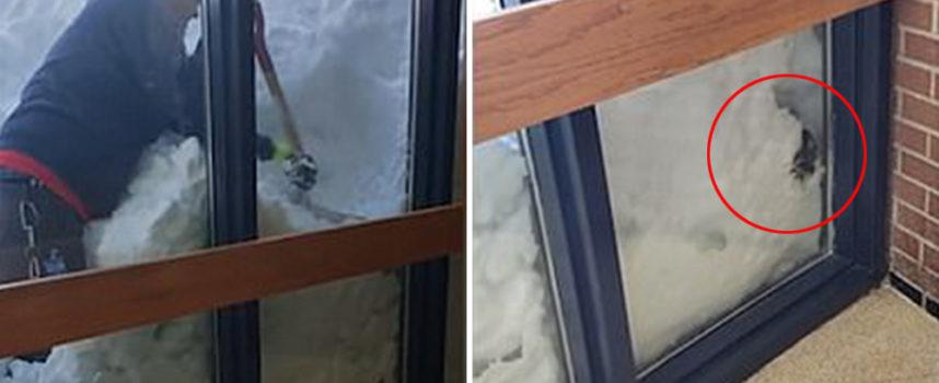 Il custode di una scuola salva una creatura sepolta nella neve