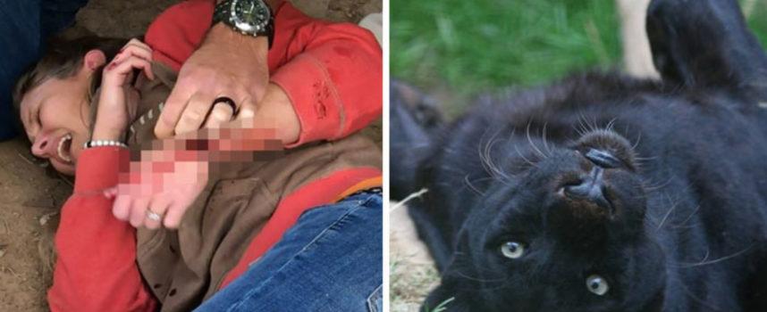 Jaguar che ha attaccato la donna non sarà sacrificato, lo zoo garantisce