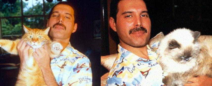 20 foto che mostrano come Freddie Mercury amasse i suoi gatti come se fossero suoi figli