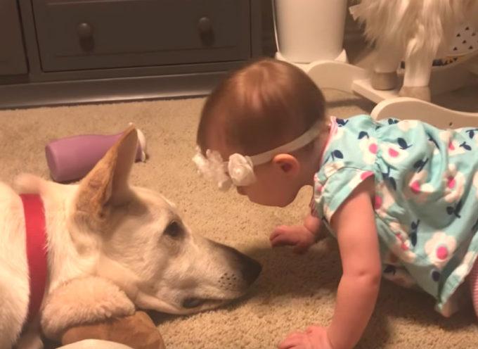 I filmati catturati dai genitori di bambini e cani diventano virali