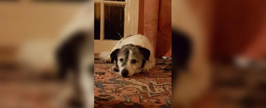 Il cucciolo di 14 anni cerca una casa dove possa fare un pisolino di almeno 9 ore