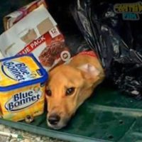 Ha gettato il suo cane malato e legato nella spazzatura, ma ha dimenticato che il karma ritorna sempre