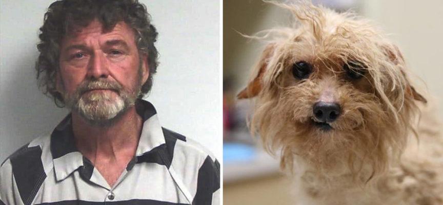 Aveva 700 animali domestici che vivevano nelle peggiori condizioni mai pensate, ma la giustizia è stata fatta