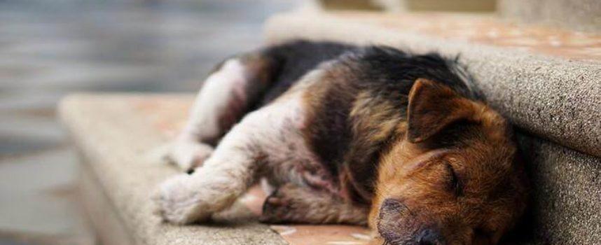 I Paesi Bassi diventano il primo paese al mondo senza cani randagi