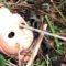 """Isola Santa: trovati resti di un rito in salsa """"horror"""""""