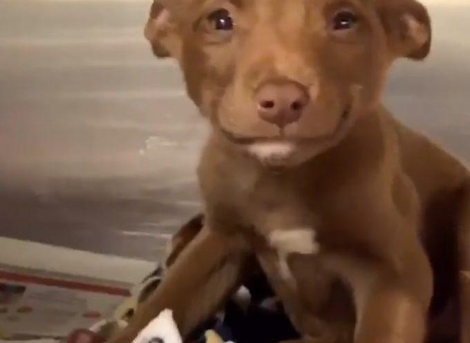 Layla, il cucciolo di 7 settimane che non riesce a smettere di sorridere dopo essere stata salvata dalle strade