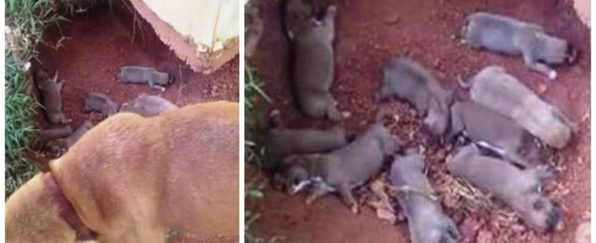 Maternità esemplare – Ha nascosto i suoi 9 cuccioli in un fossato per proteggerli dal loro crudele proprietario