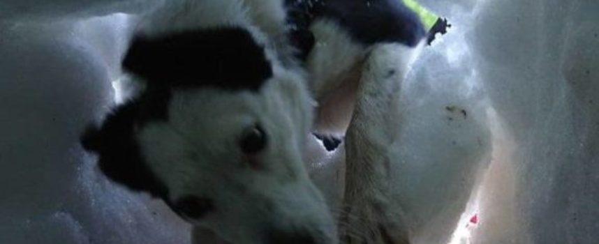 Guarda un cane da salvataggio in azione dal punto di vista della vittima intrappolata