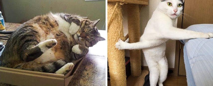 15 gatti esilaranti che hanno conquistato Internet con il loro buon umore