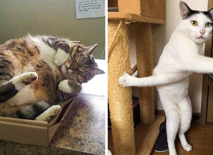 20 gatti esilaranti che hanno conquistato Internet con il loro buon umore