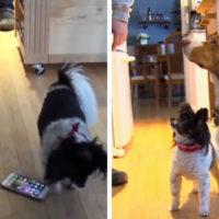 Due cuccioli birichini chiamano 16 volte in 30 minuti il 911 perché volevano un pò di attenzione