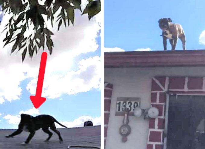 Bloccato sul tetto di una casa, ma volevo davvero avere qualcuno con cui giocare