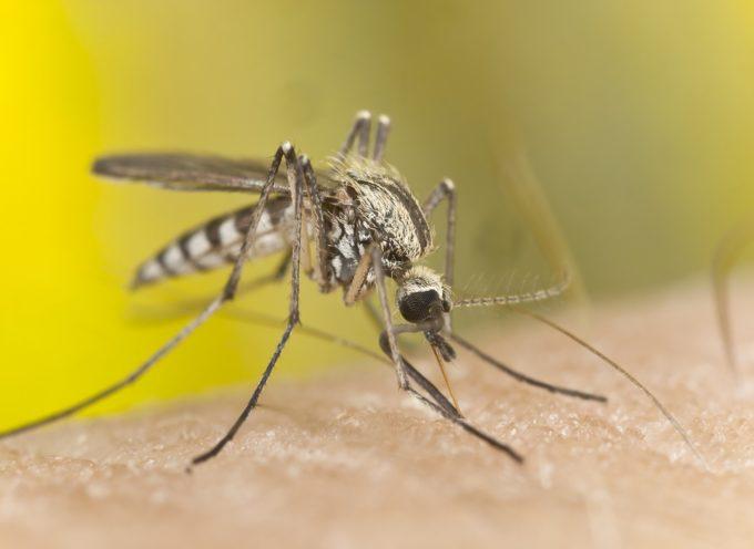 Lotta alle zanzare, mozione appovata all'unanimità