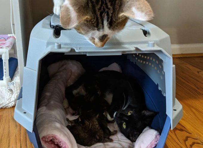 Gatto alleva i suoi gattini dopo essere stato salvato dal canile