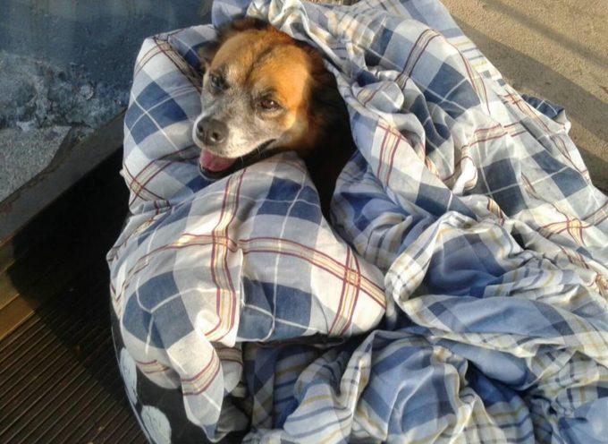 I dipendenti di questa stazione dei bus offrono riparo ai cani randagi con coperte e pneumatici