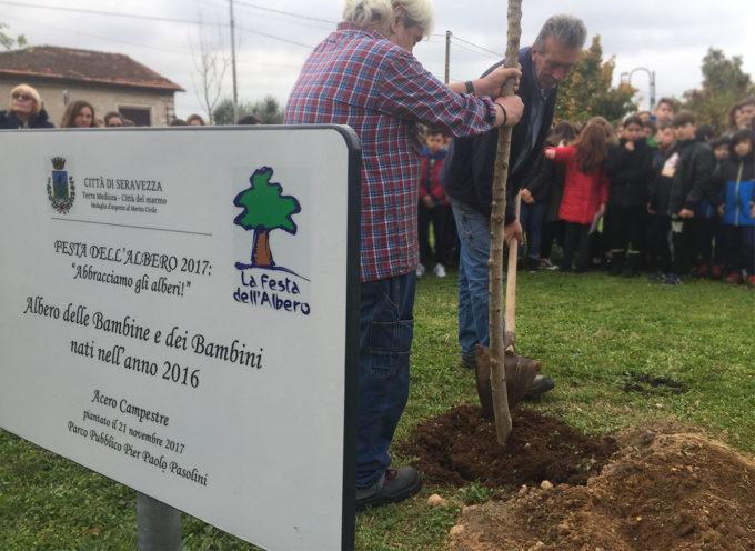 Educazione Ambientale: Festa dell'Albero domanialla scuola dell'infanzia Munari e al Parco Pasolini di Querceta