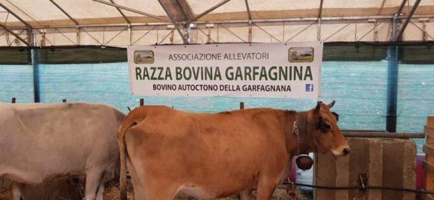 Che cosa fare il weekend del 9 e 10 novembre in tutta Italia