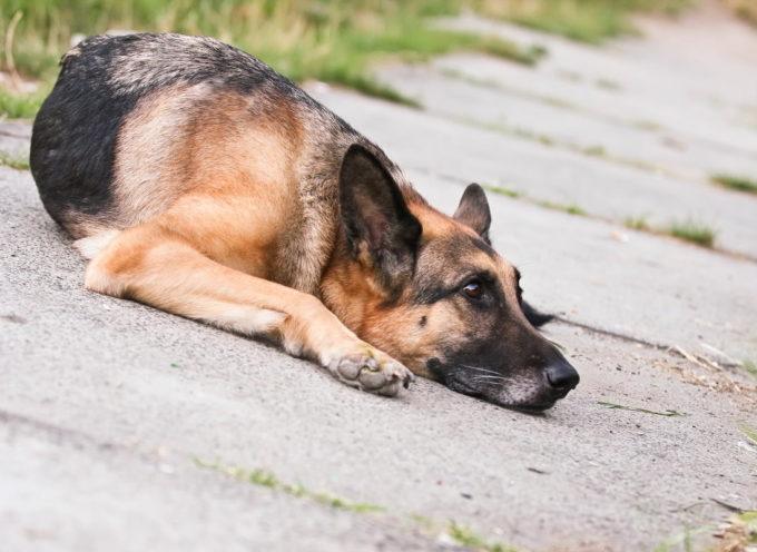 Cani poliziotto costretti a vivere al gelo in una caserma di Bologna, la denuncia del Siulp