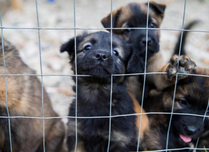 Cani maltrattati e picchiati: sequestrato e chiuso un negozio di toelettatura nel bresciano