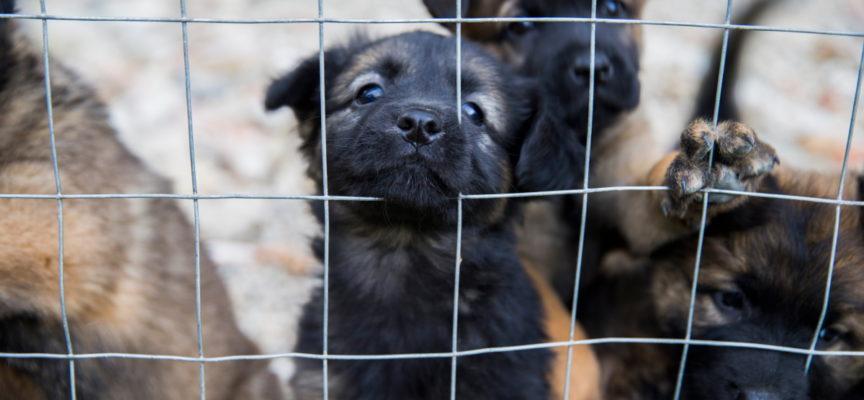 Pandemia e abbandoni animali, al canile di Pontetetto tanti arrivi