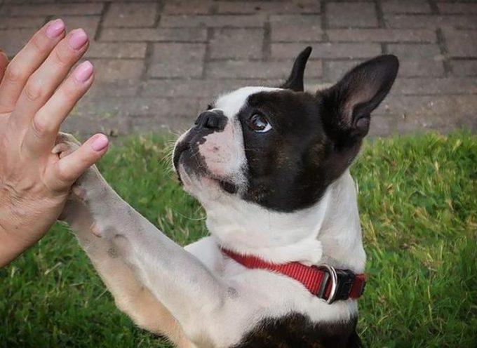 LUCCA – Lezioni per imparare a relazionarsi al meglio con il proprio cane