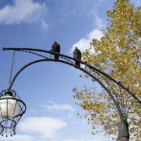 13 Novembre – Giornata Mondiale della Gentilezza
