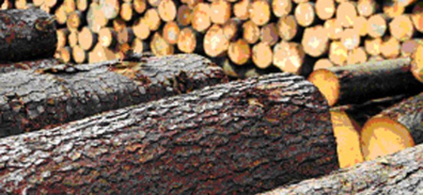 Indagine conoscitiva della Regione Toscana sull'uso della legna e delle biomasse in ambito residenziale