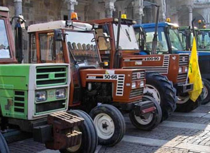 VERSILIA: DOMANI AGRICOLTURA IN FESTA PER GIORNATA INGRAZIAMENTO,PARATA DI TRATTORI E BENEDIZIONE DEI FRUTTI DELLA TERRA
