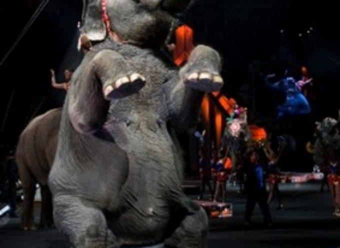 LUCCA – rinnovata la condanna per i circhi con animali
