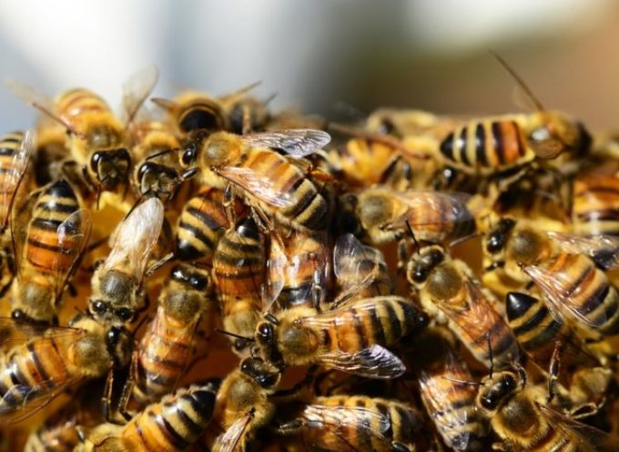 Clima. Cia, con moria api a rischio 70% produzione agricola mondiale