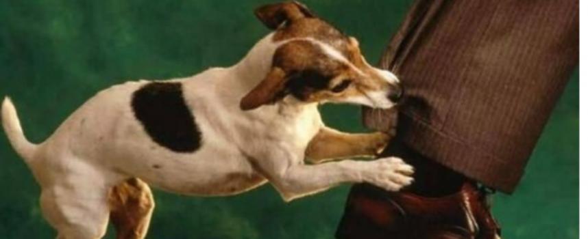 Il padrone non è sempre responsabile del morso del cane, lo dice la Cassazione