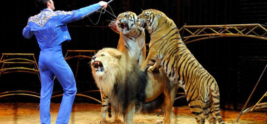 Protesta animalista contro il circo