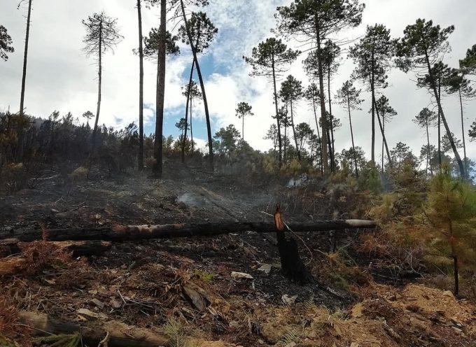 CAPANNORI – Fino al 31 gennaio si possono presentare le osservazioni alla perimetrazione delle aree boscate percorse da incendi nel 2019