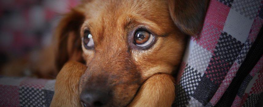 Canile di Diecimo:«E' vero lo stop a gennaio 2020? Che fine fanno i cani?»
