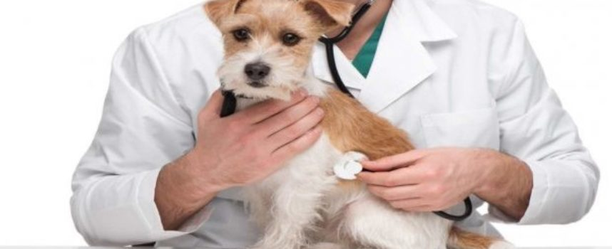 Detrazioni spese veterinarie, aumenta il tetto massimo in Legge di Bilancio 2020