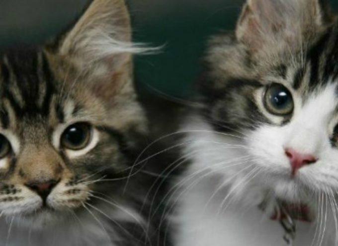 Dal 1º gennaio microchip obbligatorio anche per i gatti