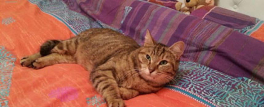 Scomparso da 536 giorni, questo gatto salta tra le braccia della padrona quando finalmente la rivede