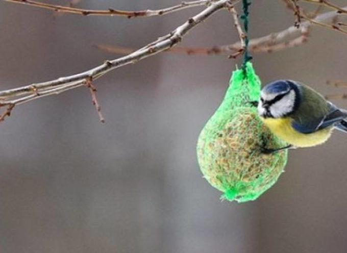 Aiutiamo gli uccellini in inverno: come realizzare le palle di grasso e semi