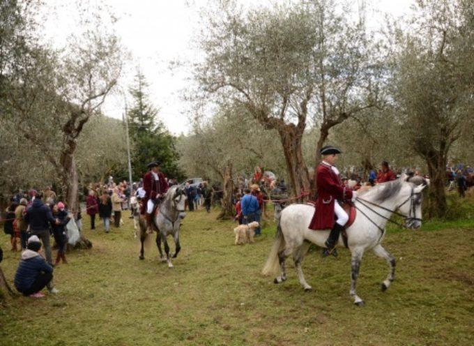 a Valdicastello la benedizione degli animali, cento cavalli sfilano nel centro storico
