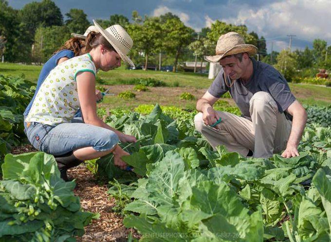 Agricoltura, la Toscana dei giovani senza terra;