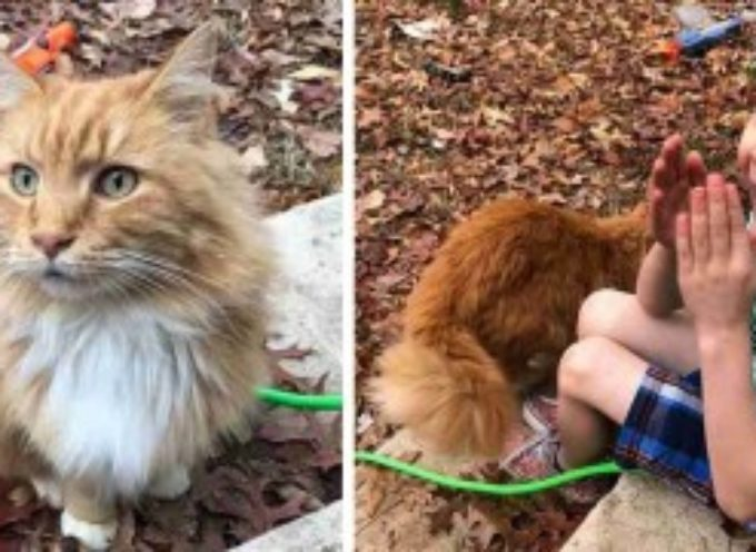 Questo gatto si presenta a casa di un bimbo a cui ne era appena morto un altro: tra i due è subito amore