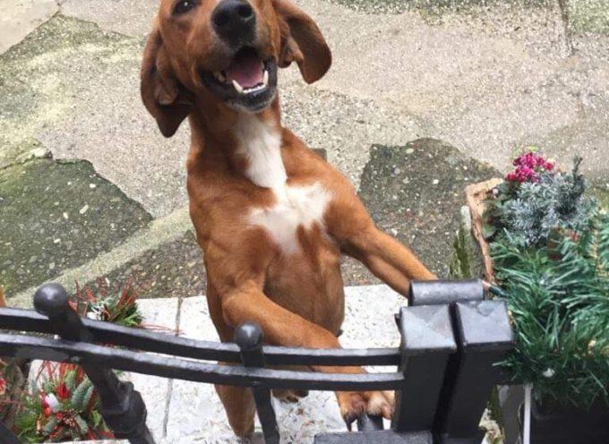 Questo cagnolino si trova a Fabbiano, nella montagna seravezzina, qualcuno lo riconosce?
