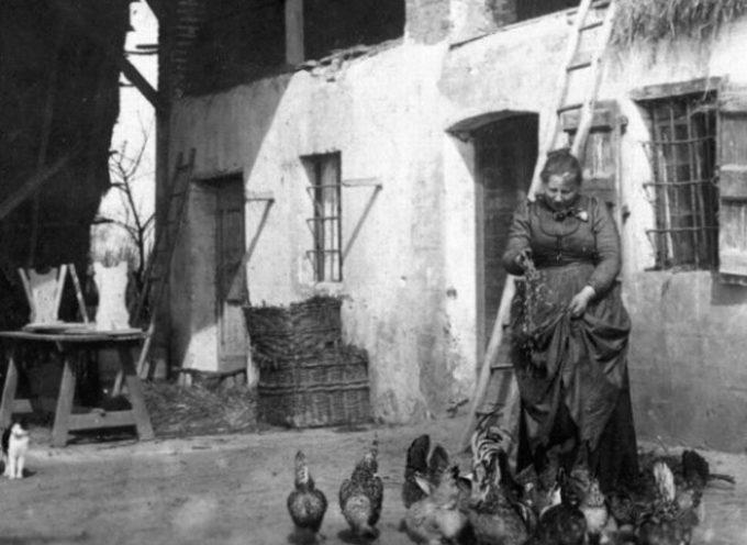 """"""" Non c'è gallina ne' gallinaccia, che di gennaio l'uovo non faccia""""."""