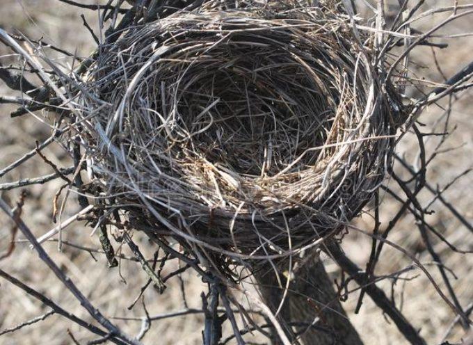 I nidi degli uccelli