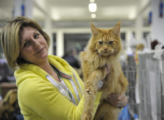 In mostra a Lucca per la prima volta il rarissimo gatto Lykoi