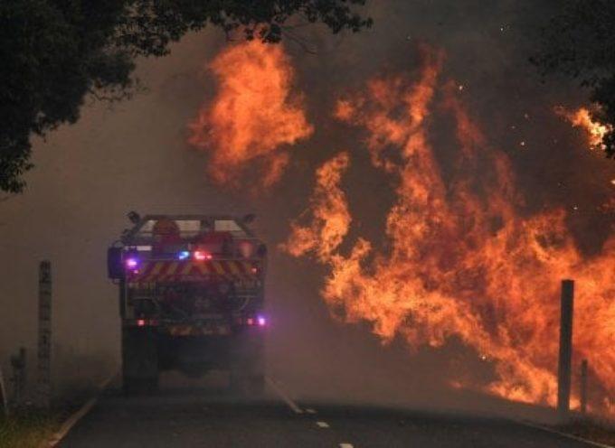 Australia, un patrimonio ambientale unico sta andando in fumo – Testimonianza di un'italiana che vive a Sydney.