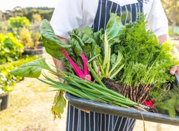 Cosa mangeremo nel 2020? Le nuove (sostenibili) tendenze alimentari.