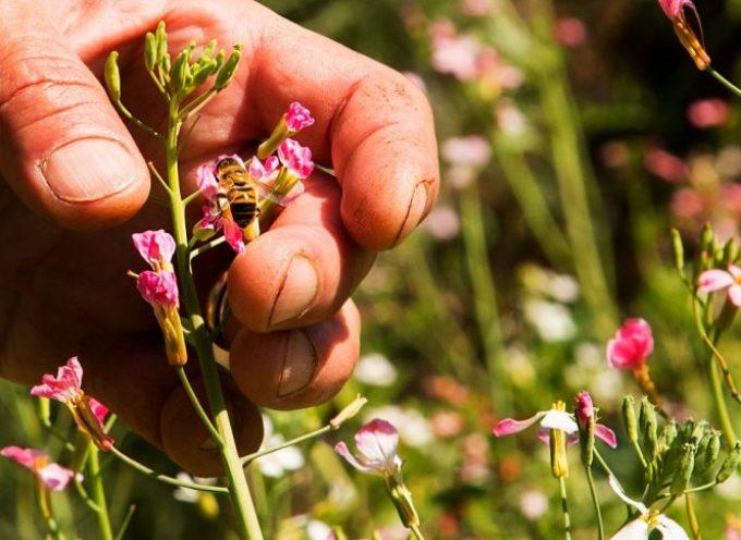 L'iniziativa dei cittadini europei per salvare le api e gli agricoltori